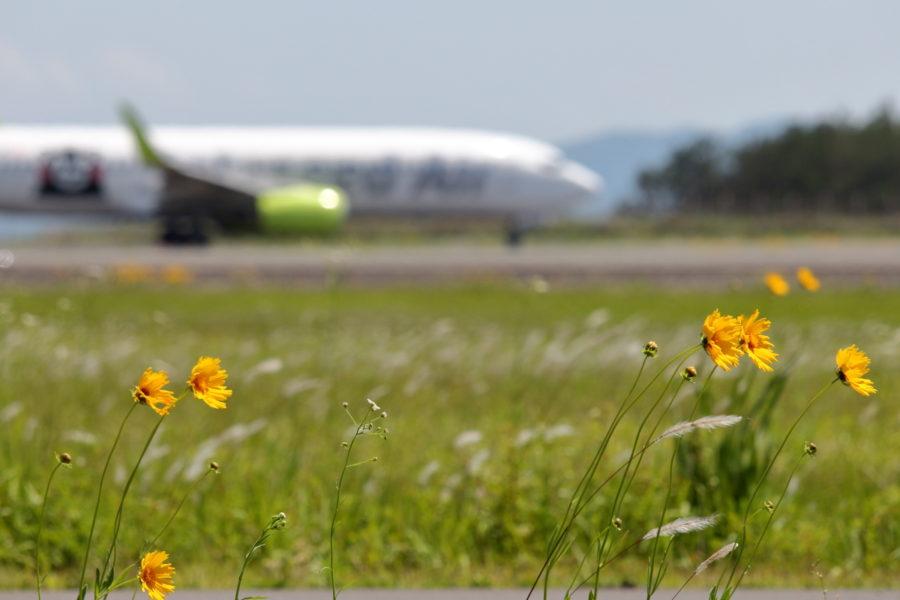 宮崎空港に咲く黄色の花オオキンケイグク。きれいに見えるが特定外来生物だ。