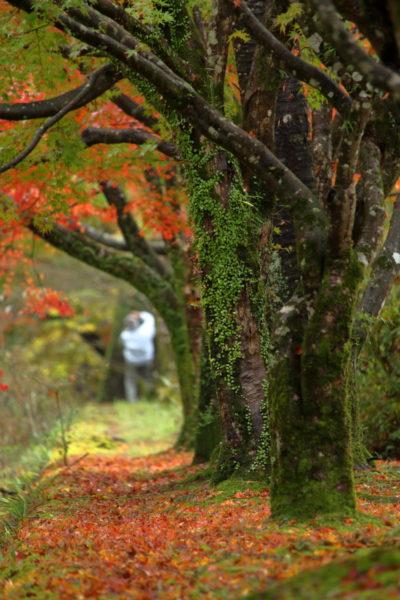 青井岳温泉の紅葉を楽しむ紅葉狩りの男性