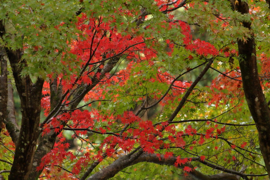 青井岳温泉の庭園に彩る紅葉