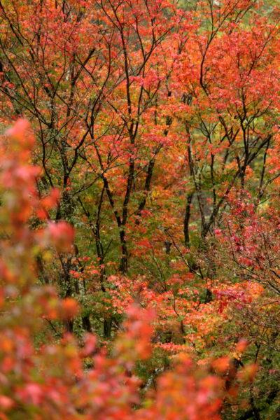 青井岳温泉に広がる紅葉