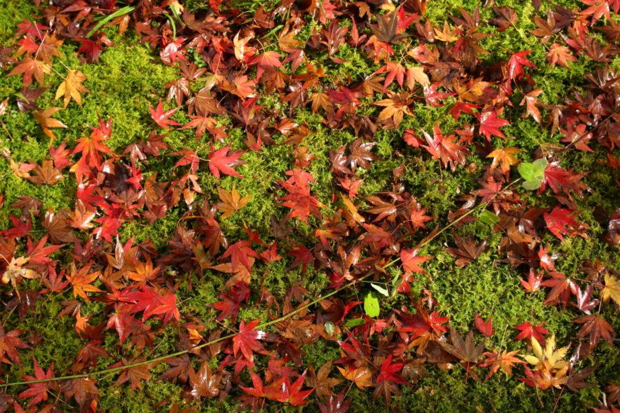 青井岳温泉の庭に彩る紅葉