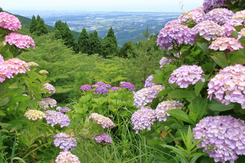 荒平山森林公園から望む宮崎平野と太平洋