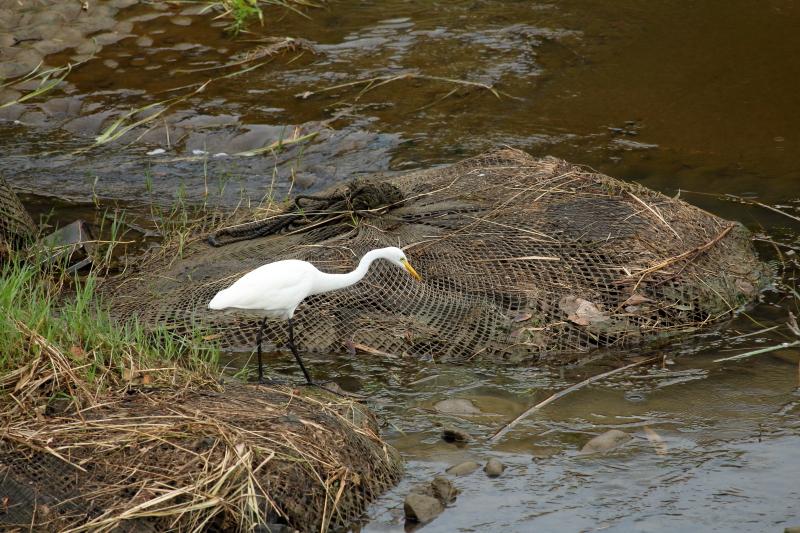 宮崎空港近くを流れる川でエサを待つサギの写真