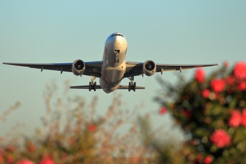 山茶花咲く宮崎空港を離陸するANA-B777飛行機