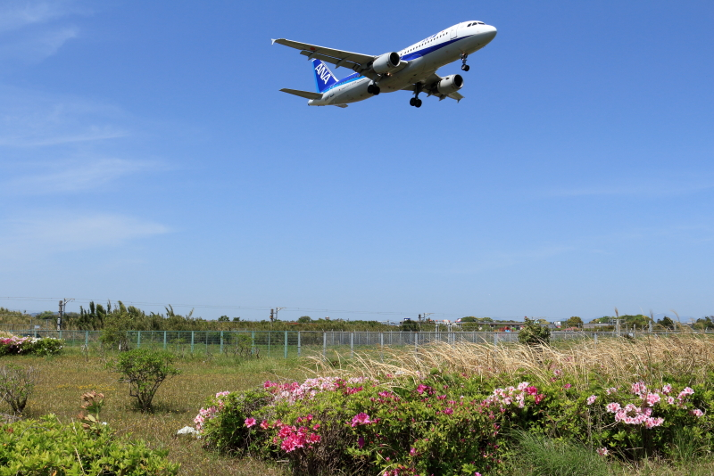 宮崎空港周囲に植栽されているつつじは春を知らせている。上空を飛行するANA飛行機写真