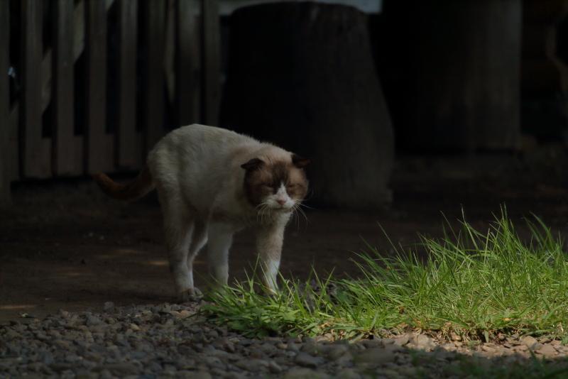 新田原基地南門で出会ったネコ
