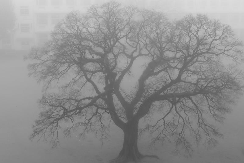 宮崎市内にかかる霧たち