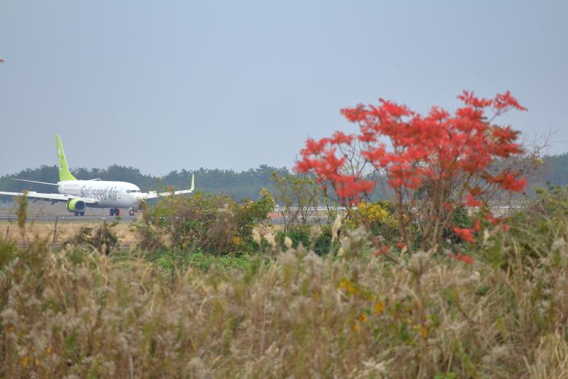 宮崎空港北に咲いている秋のはな