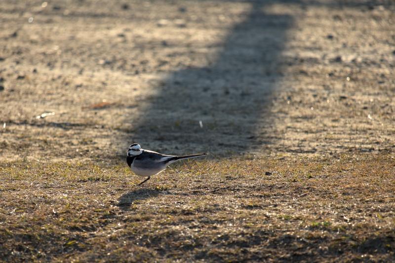 宮崎空港のそばで生息野鳥