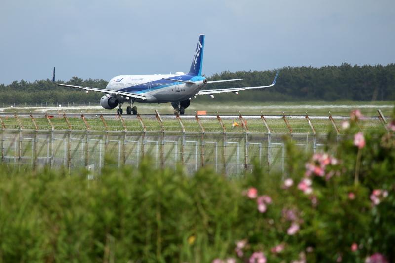 宮崎空港側に咲いた野ばらとエアバスA321飛行機