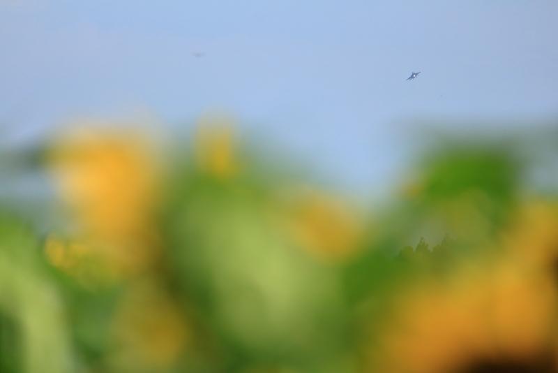 西都原公園に咲くひまわりと新田原基地所属のf15戦闘機のコラボ